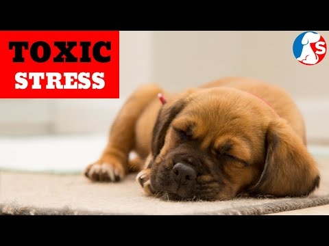 is-your-dog-a-stressed-dog?-|-environmental-toxins-for-dogs
