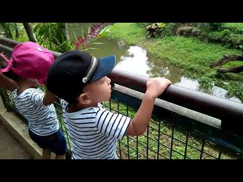 KEBUN BINATANG||INDONESIA ZOO TH 2017||BELI OTOK2 MONKEY