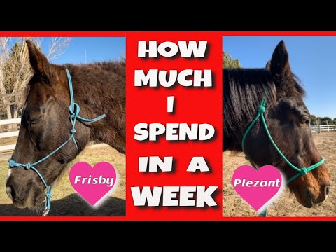 How Much Does It Cost To Have A Horse? Weekly Feed Costs