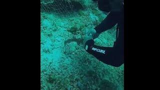 Diver Rescues Little Reef Shark Stuck Into A Net
