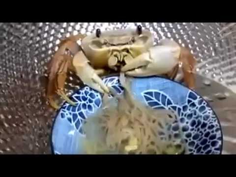 You'll Never Know Joy Like This Crab Chowing Down on a Plate of Noodles