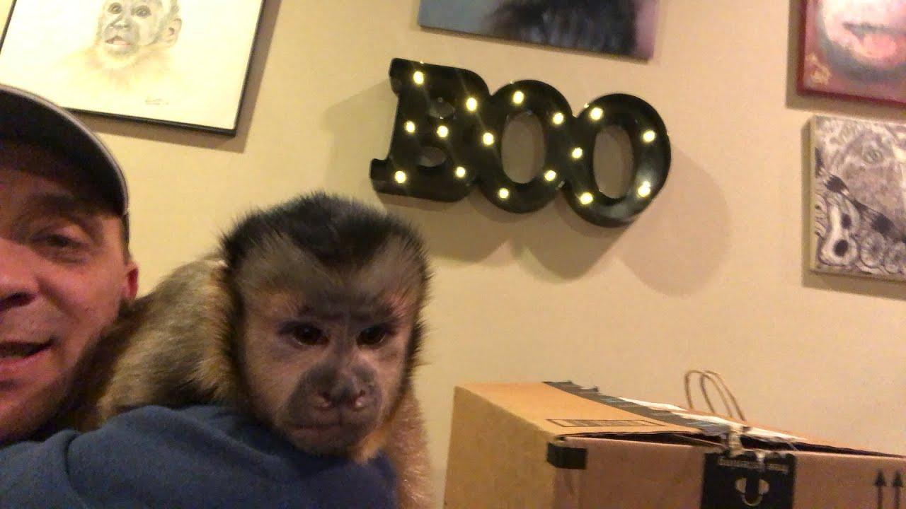 MonkeyBooCrew Mail! Happy Birthday MonkeyHappy!