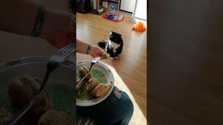 Сенсация!!! Уличный кот отказывается от еды! / Our Funny Cat & Human Food
