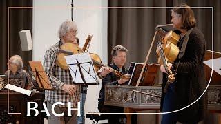 Kuijken and Swarts on Bach Cantata BWV 23 | Netherlands Bach Society