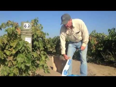 Grape Picking Instructions