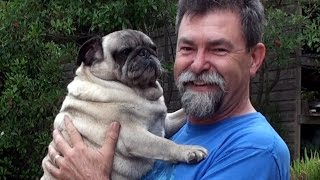 Barry The Pug Weighs In # 27