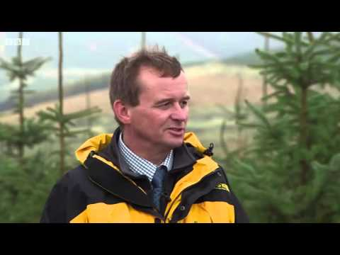 Sustainable Forestry in the UK