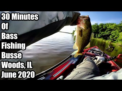 30 Minutes Of Bass Fishing At Busse Woods, IL June 2020
