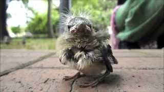 Cute Little Bird Calls Out For His Mom