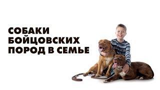 Воспитание собак бойцовских пород