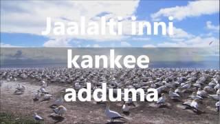 Oromo Gospel Song/Dasta Hinsarmu/Gargaarsa bara ijoollummaa