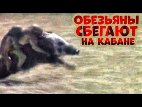 приколы про животных до слез смотреть бесплатно
