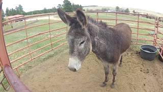 Working with Snort the Wild Donkey