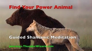 Meet Your Power Animal - Guided Shamanic Journey Meditation to Find Your Power Animal