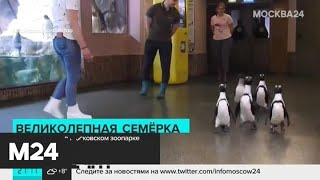 Фото В Московском зоопарке устроили Andquotпарадandquot пингвинов - Москва 24