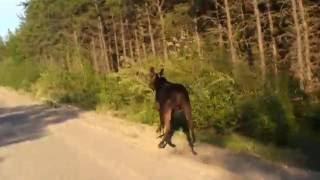 Moose in Northern Ontario