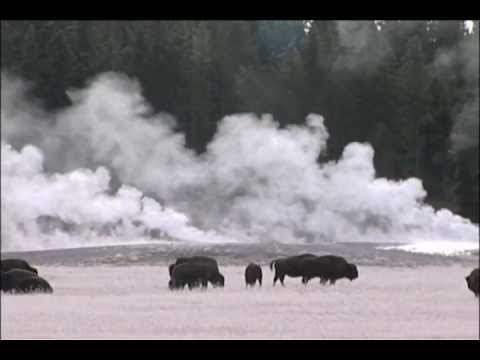 Yellowstone's planned bison slaughter PSA