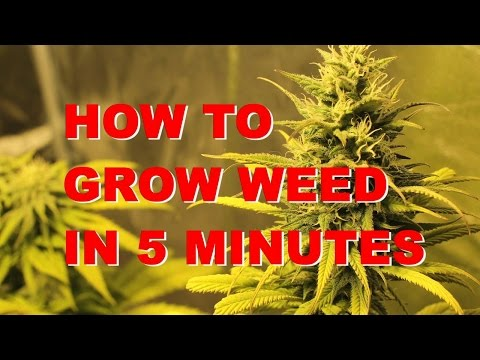 How to Grow Marijuana in 5 minutes