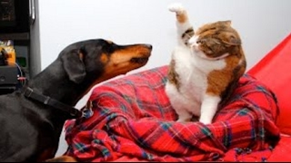 Funny Cats And Dogs Part 5   Funny Cats vs Dogs   Funny Animals Compilation