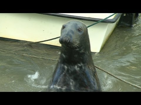 Sammy the Seal makes a Splash in Wicklow Town