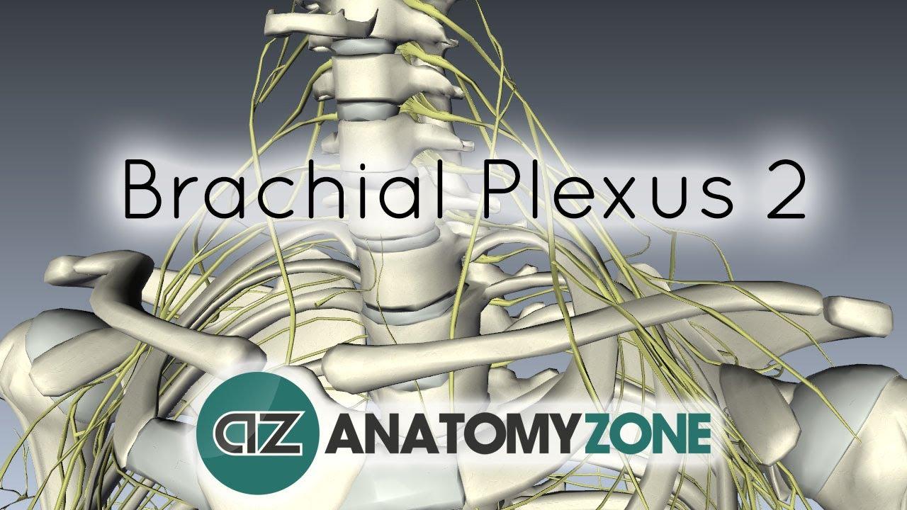 Brachial Plexus Subway Map.Brachial Plexus Neurology Update