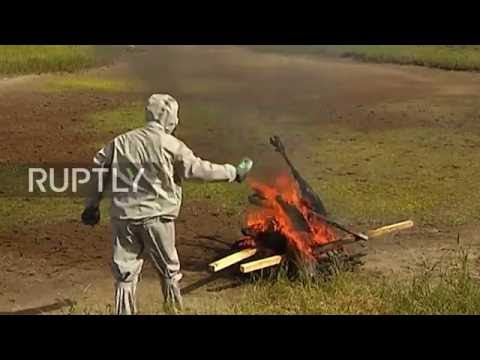 Russia: Defence Ministry burns thousands of reindeer killed by anthrax