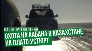 Охота на кабана в Казахстане