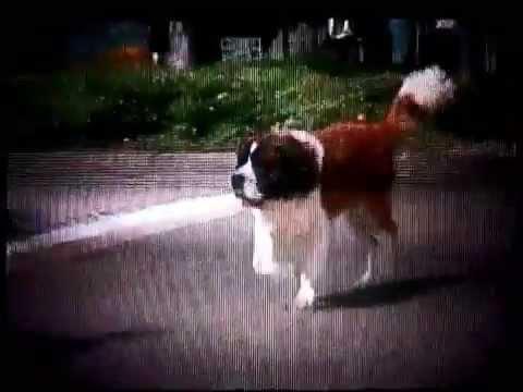Beethoven 1992 Teaser Vhs Capture Youtube