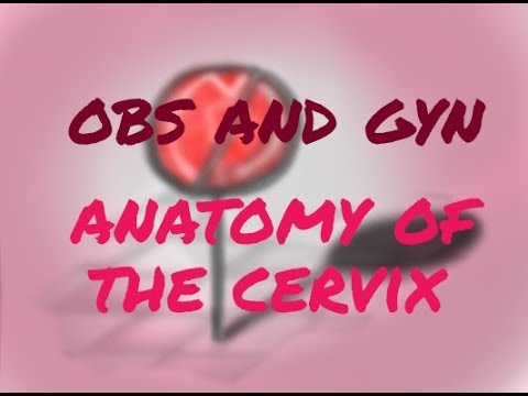 Anatomy of the cervix - YouTube