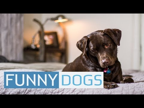 Funny Dog Videos 🐶 Cute And Fail Compilation 2019