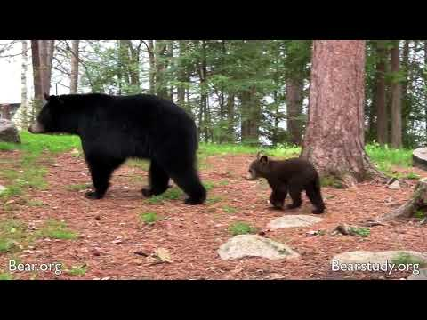 Valentine And Cubs - May 27, 2019