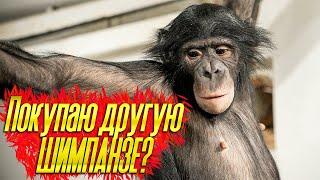 ВОПРОС ОТВЕТ Покупаю новую обезьяну Конкурс на название канала Как здоровье у шимпанзе Бони