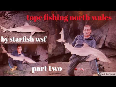 Tope Fishing Adventures. North Wales. Part Two. Gear And Tactics.