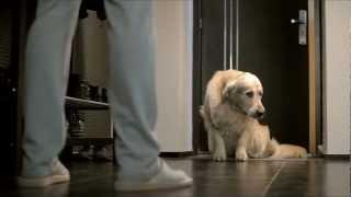 Amigo - Только одной собаке можно доверить деньги