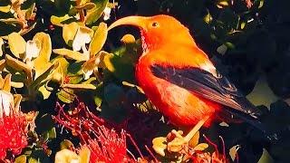 видео Птицы во время еды