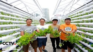 Singapore urban farming provides sustainable solutions