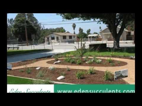 10 Succulent Outdoor Garden Design Ideas   YouTube