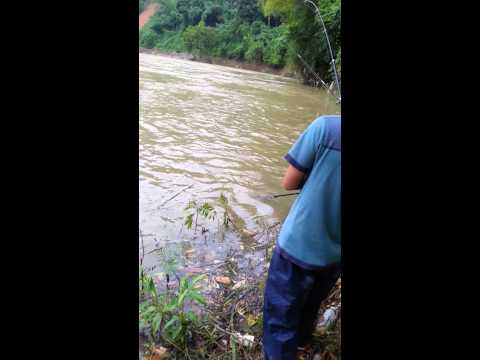 Câu cá Sông Gâm Bảo Lạc 3