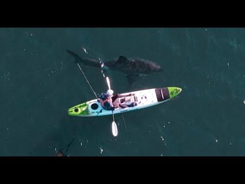 Shark Encounter With Great White While Kayak Fishing