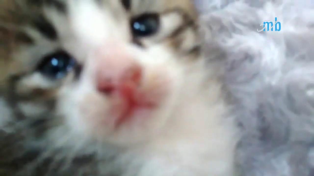 Unduh 76+  Gambar Kucing Anggora 1 Bulan Paling Imut HD