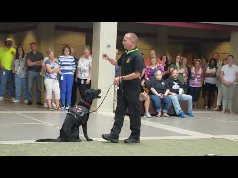 Demonstration by new Columbia Fire Department arson dog Izzo