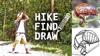 Hiking Jungle in Costa Rica & Drawing an Insect