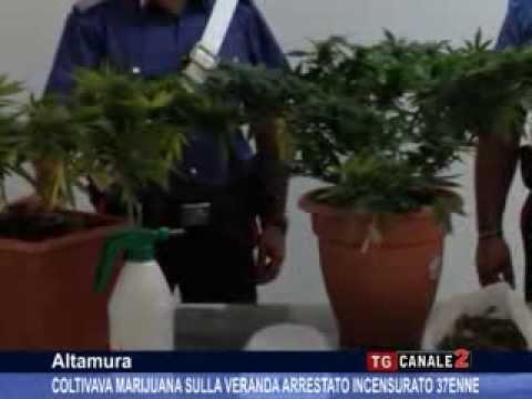 TG CANALE 2_ ALTAMURA: COLTIVAVA MARIJUANA SULLA VERANDA ARRESTATO INCENSURATO 37ENNE