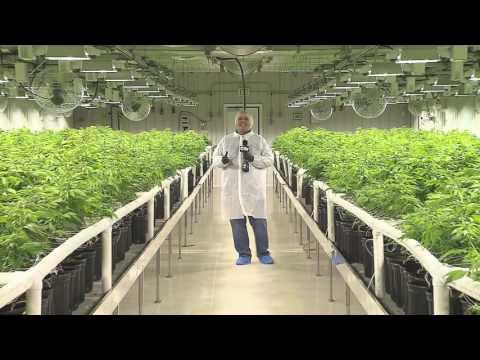 Big plans in store for Alberta medicinal marijuana manufacturer Aurora Cannabis