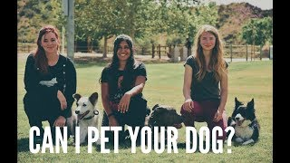 Can I Pet Your Dog?   How to advocate for your dog when dog training