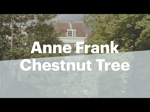 Views Of The Anne Frank Chestnut Tree Youtube