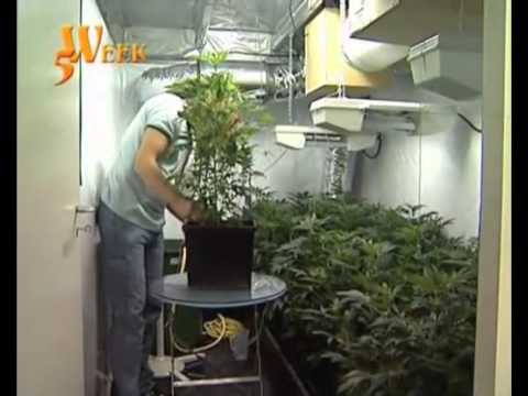 culture cannabis indoor part 2 youtube. Black Bedroom Furniture Sets. Home Design Ideas
