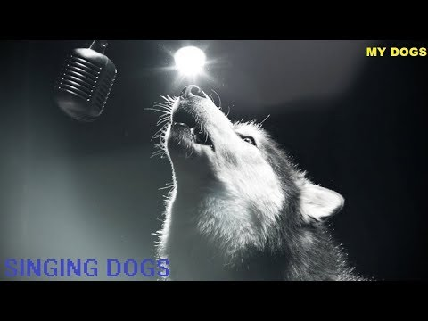Dogs Singing ★ The Best Singing Dog Video in the world#Compilation (Funny Pets)