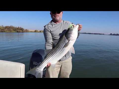 REDEMPTION! Craig Saves The Day With This NICE Ca. Delta STRIPER!! Nov 10, 2019