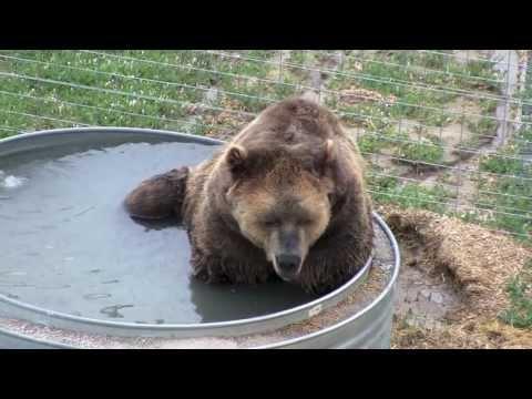 The Wild Animal Sanctuary - Keenesburg, CO